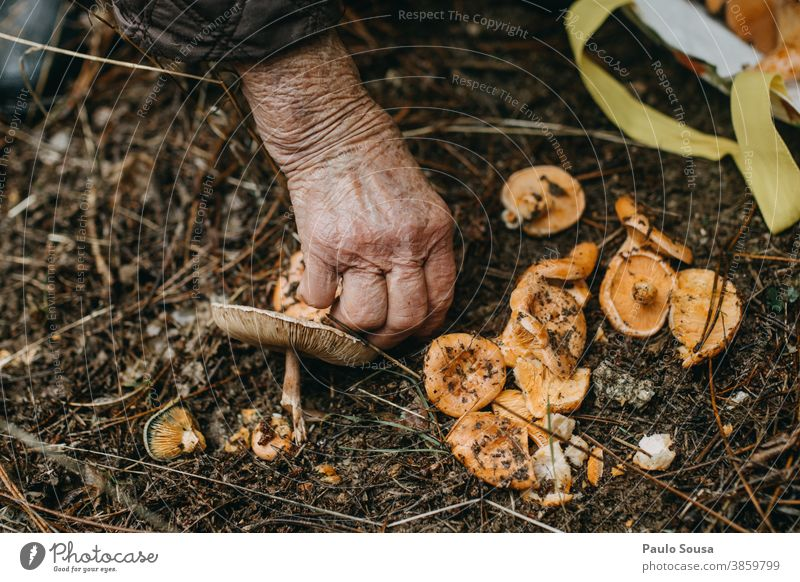 Close up hand picking mushrooms Edible edible mushroom Mushroom Fresh freshness Forest Hand Environment Delicious Day Nutrition Food edible mushrooms