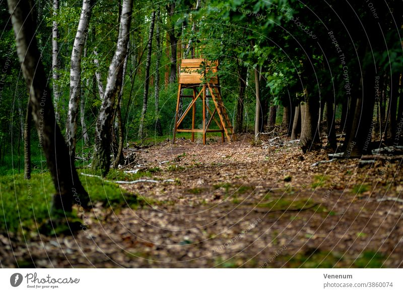 HIGHSTAND in a mixed forest in Germany, selective sharpness Hunting lodge Hunter Perches Nature Meadow Tree trees high level Hunting Blind Stag stand Forest