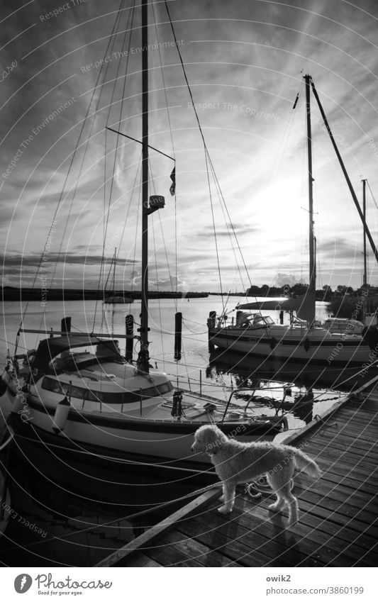 mind Water Beautiful weather Sky Clouds Horizon Weather Yacht Sailboat Harbour Jetty Sport boats Navigation Dark Safety Calm Idyll Contentment Peaceful