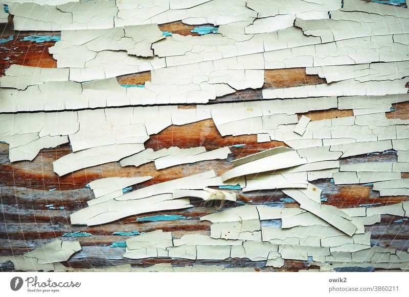 Old segments Wood Pattern Deserted Flake off Derelict Ravages of time Tracks Blue Paint traces Transience Colour photo Detail White Abstract