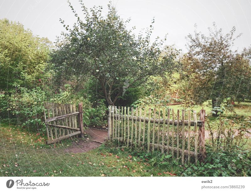 old garden Exterior shot Colour photo Garden Beautiful weather Bushes Grass Tree Foliage plant Goal Entrance Lanes & trails Sky Plant Growth Green Wood Idyll