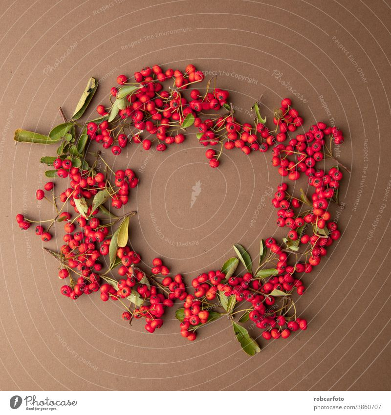christmas background with red berries of pyracantha coccinea plant frame border holiday winter festive card season merry snow tree new xmas table decoration