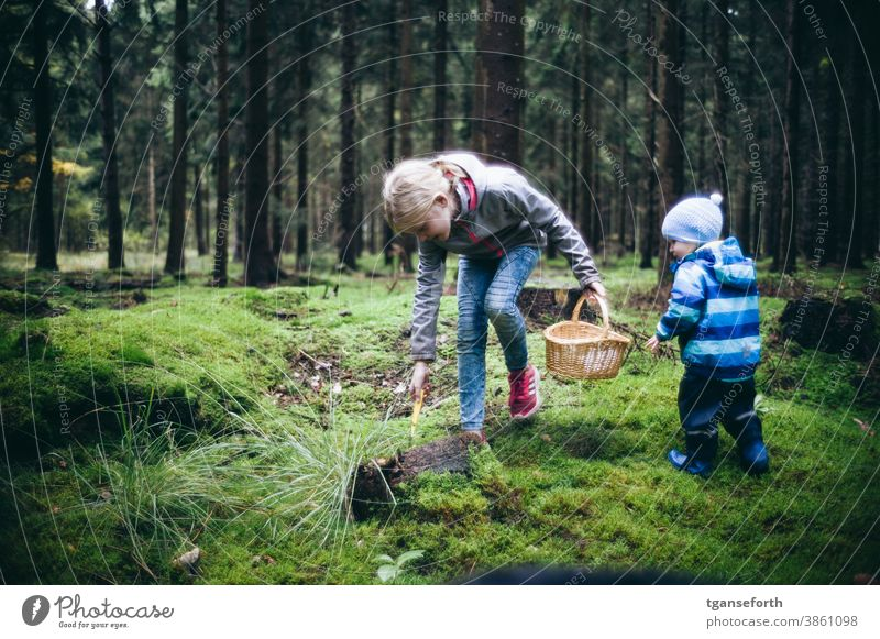 Two children picking mushrooms in the forest Forest Child Exterior shot Autumn Nature Infancy mushroom pick go mushrooming Moss Carpet of moss Colour photo