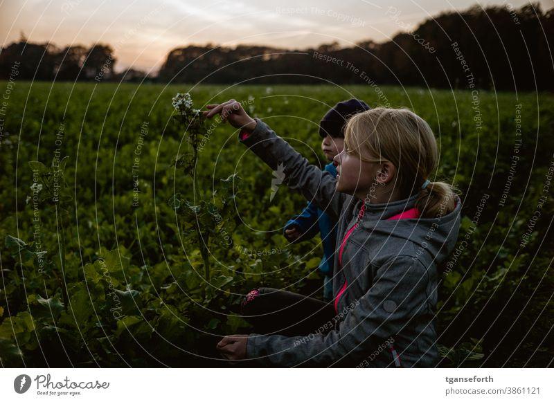 Children explore a rape plant children Study Canola Canola field Autumn Evening Dusk try Discover Infancy Nature Colour photo Sky Exterior shot out being out