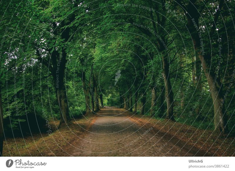 A typical Mecklenburg country road with cobblestones, which is flanked by a dense alley of trees. Country road Tree Alley. tree-lined avenue off ghostly