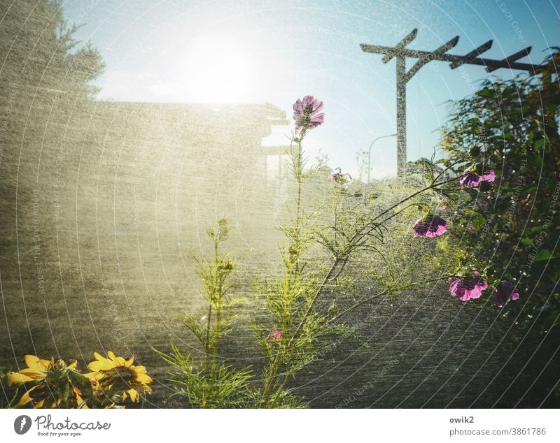 drizzle Garden Water Drops of water Rain Wet Damp Plant Shower Cast Spring Close-up Light (Natural Phenomenon) Exterior shot Mysterious Growth