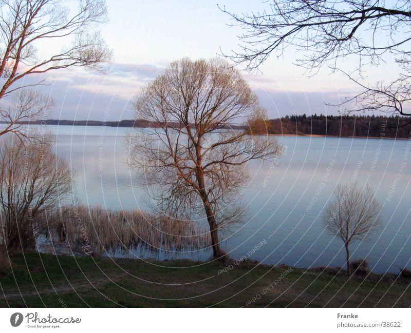 Water Tree Calm Lake