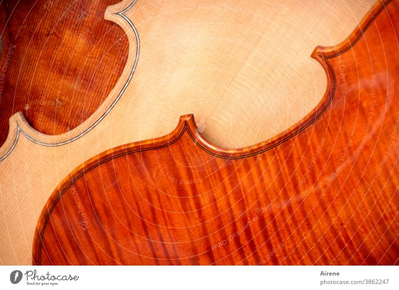 colour combination | philharmonic Violin Wood Musical instrument Sound Ornament Harmonious String instrument Elegant Culture sound body Contrast Spirited