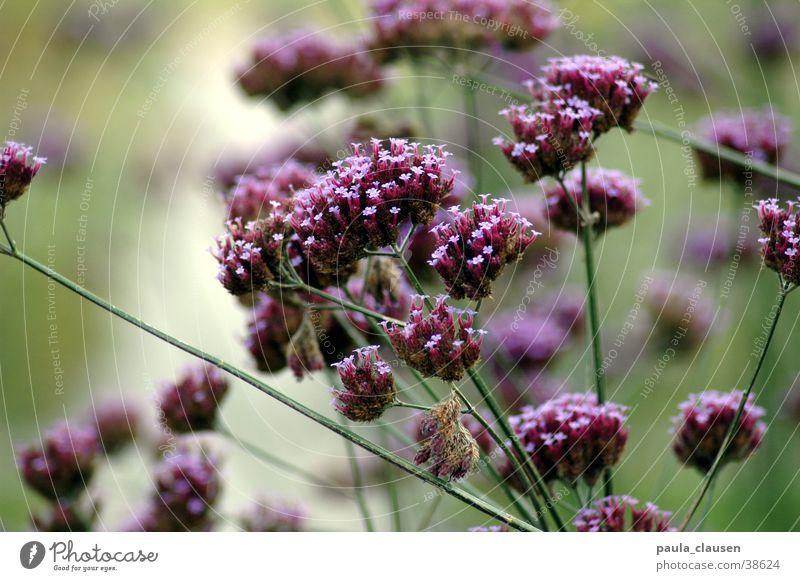 blossoms Green Leaf Flower Violet Dried flower Multiple Nature depth blur Many