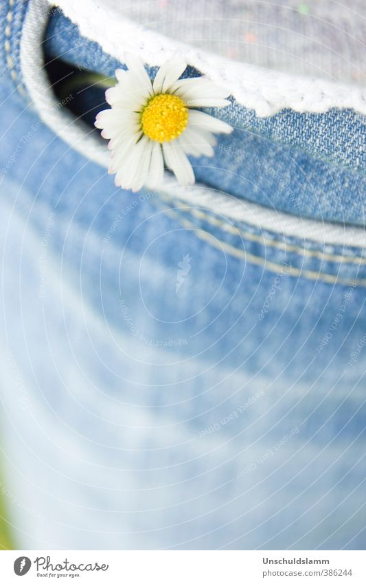 lucky charm Birthday Nature Plant Spring Summer Flower Blossom Wild plant Daisy Clothing Jeans Trouser pocket Happiness Fresh Bright Small Beautiful Blue Yellow