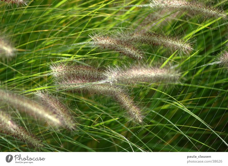grass Grass Green Movement Delicate Visual spectacle Wind Castle Dyck slight movement Nature
