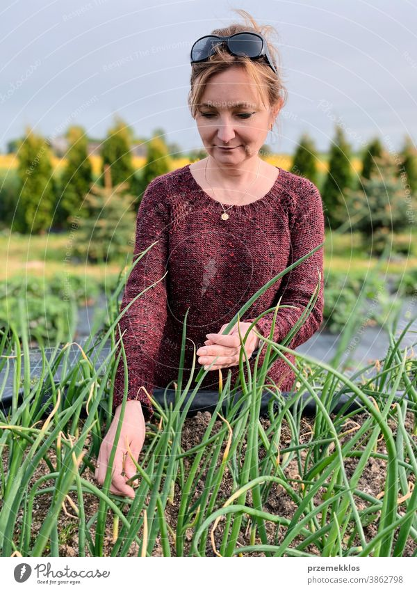 Woman picking the vegetables in a garden activity adult agricultural agriculture authentic backyard candid casual concept country crop day daylight ecology