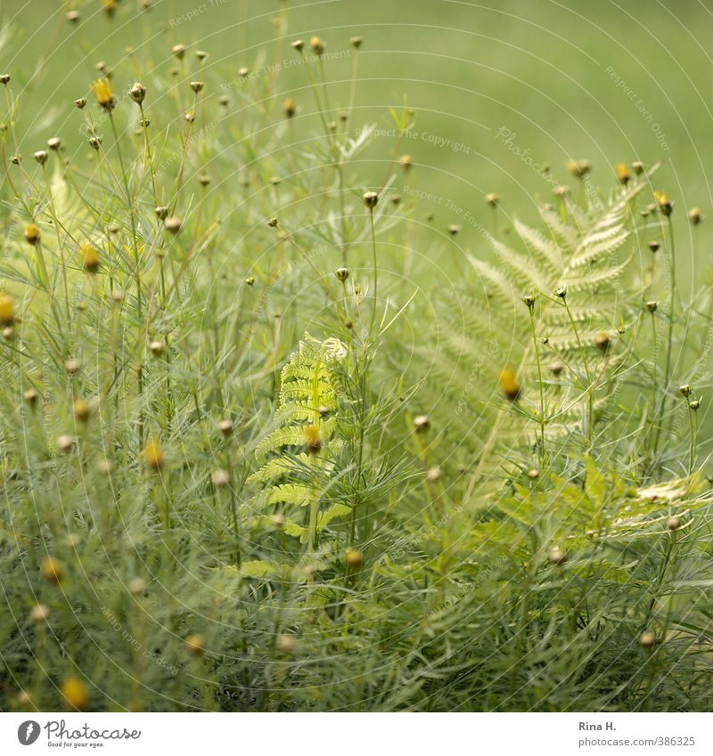 Nature Green Summer Plant Yellow Garden Natural Bright Beautiful weather Protection Safety (feeling of) Fern