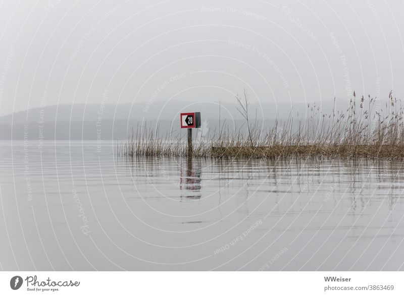 Timeless silence on the lake, a grey day without shipping traffic Lake Fog Water traffic signs reed shaggy silent Calm forsake sb./sth. Gray Dreary sad