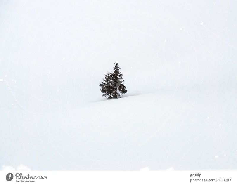 Fir trees in the snow fir tree fir trees winter landscape Snowscape Winter Christmas Christmassy White Green Idyll Snowfall Loneliness Snow fun Skiing Landscape