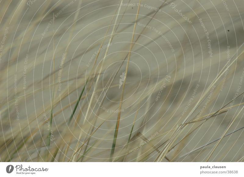 grass Grass Beach Beige Bleached Netherlands grasslands beach grass Sand Bright