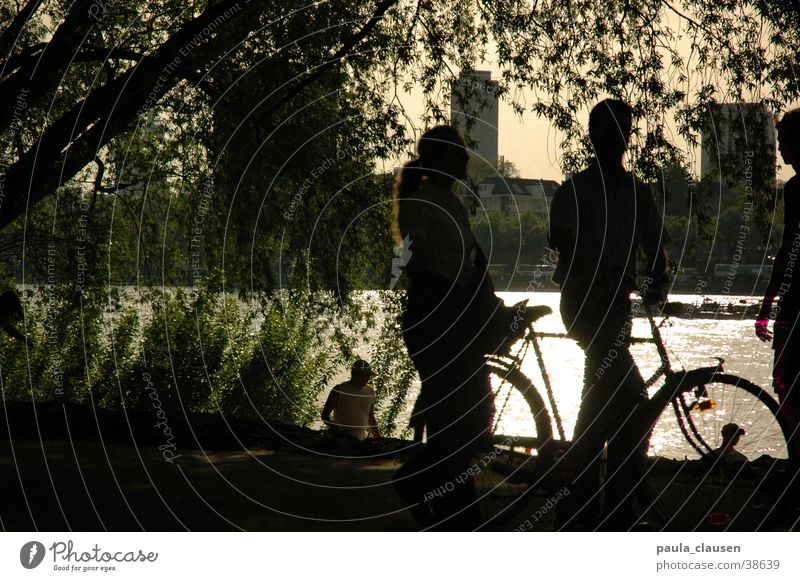 cycle Bicycle Back-light Cologne Sandy beach Weeping willow Rhine Shadow Coast 2 persons Pasture