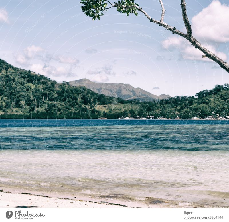 in the beautiful  island cosatline and tree beach philippines tropical palm sand vacation sea summer ocean paradise travel landscape water sunny coast nature