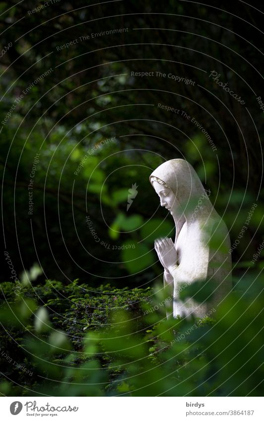 Praying Mary. Statue of Mary surrounded by plants on a cemetery Virgin Mary Christianity praying Cemetery Death Religion and faith Prayer Grief Green plants