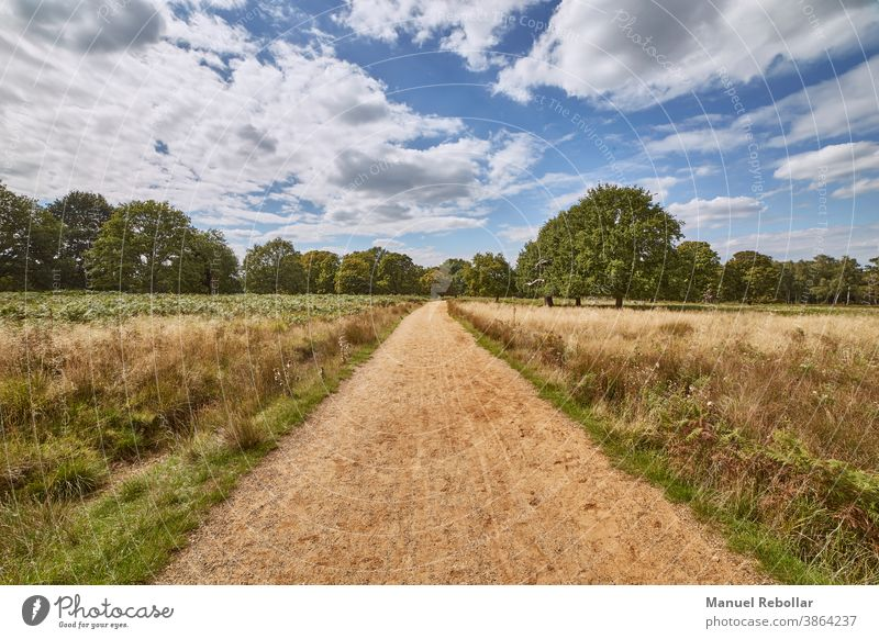 photography of road in the field with sky landscape rural summer nature meadow horizon grass green blue sunlight plant spring countryside background agriculture