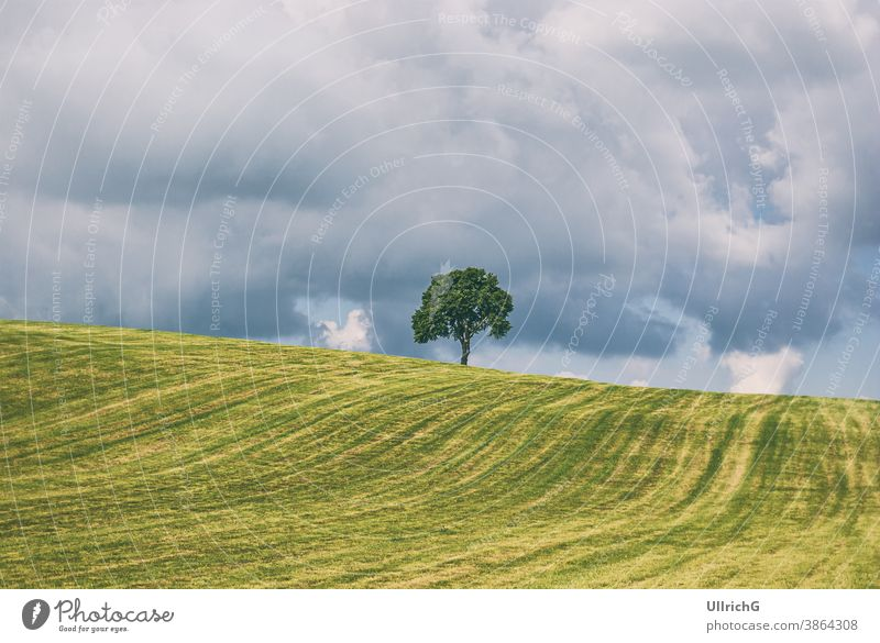 Single tree on a hill in a rural area in summer in a thunderstorm atmosphere. landscape single rural areal countryside idyllic scenery meadow grassland season