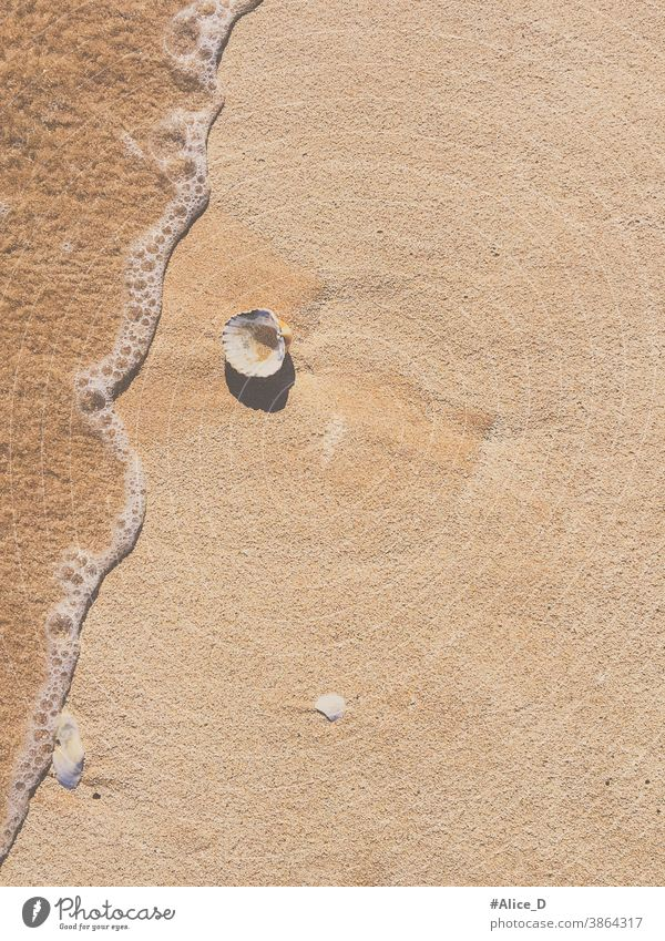 Scallop on sandy beach with water wave top view Top journey peaceful freedom alone Wild seashell space outdoors object coastline beautiful calm leisure Sand