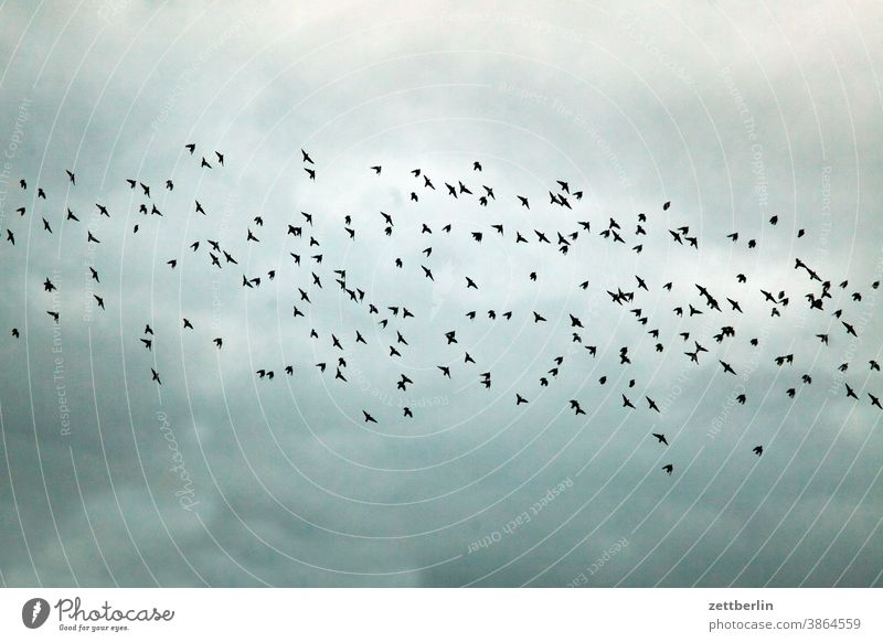 Flock of birds or flock of birds? Evening Movement Trajectory Airfield Sky Deserted Nature Copy Space Transport wide Bird crowd shoofy Flying Starling Crow