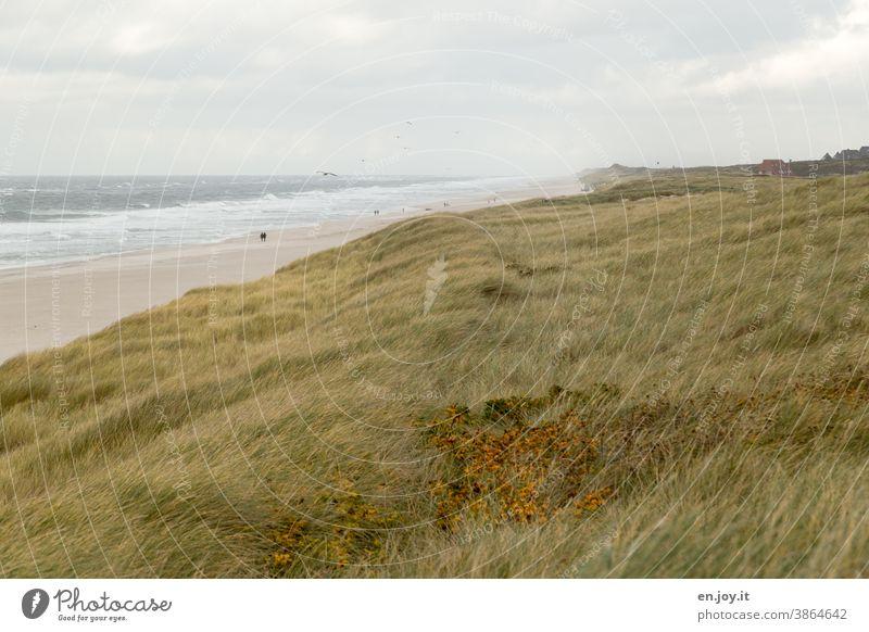Dune landscape on the beach and the North Sea duene dunes Marram grass Beach Ocean Grass Waves Sky Horizon Sylt Germany Schleswig-Holstein coast
