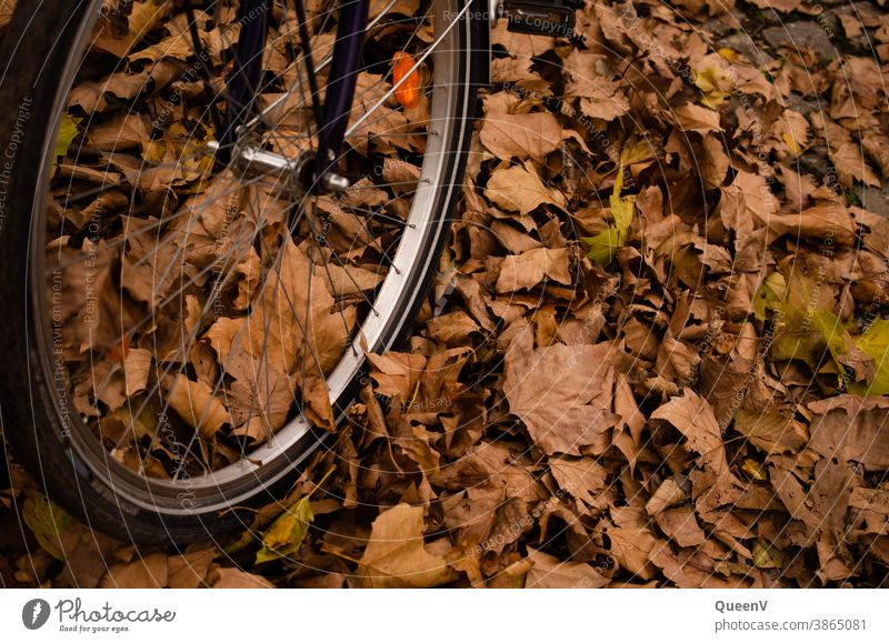 Close-up of a bicycle tire with fallen leaves in autumn Bicycle tyre Autumn Orange golden Gold To fall Leaf colourful Nature Tire Transport