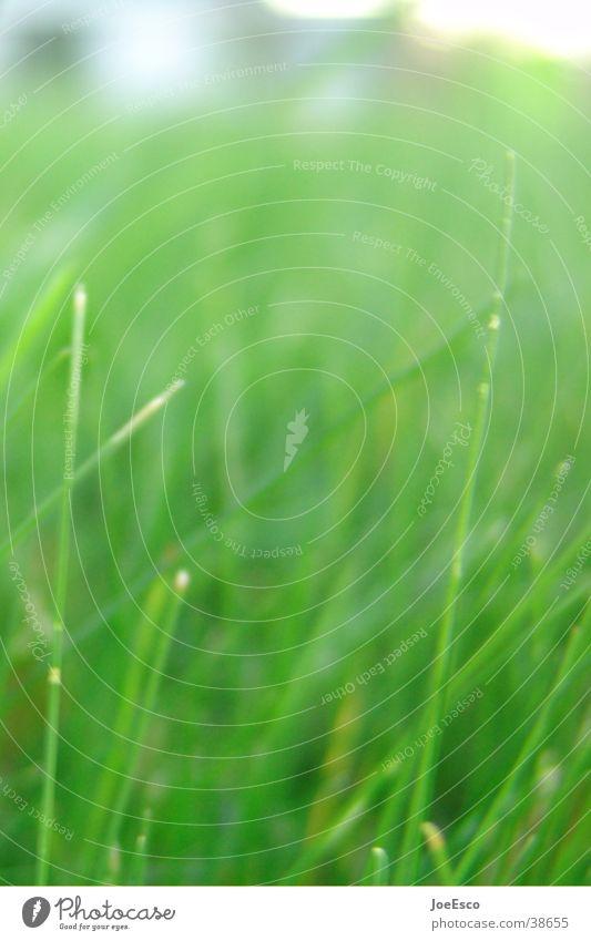 Recently in the park Meadow Growth Grass Grassland Nature Lie Park Colour photo Exterior shot Detail Blur