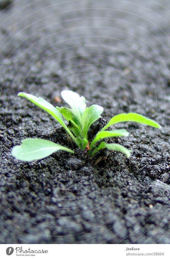 power of nature Arrange Energy industry Environment Nature Plant Foliage plant Street Growth Success Power Brave Determination Beginning Advancement Dandelion