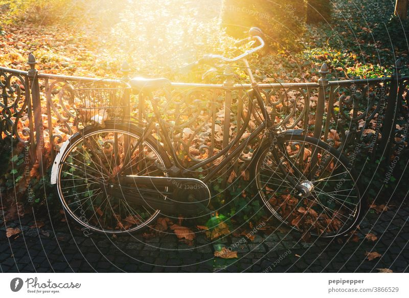 Bicycle in backlight Back-light Park Sun Summer Exterior shot Light Sunbeam Tree Deserted Environment Plant Colour photo Sunlight Beautiful weather Nature
