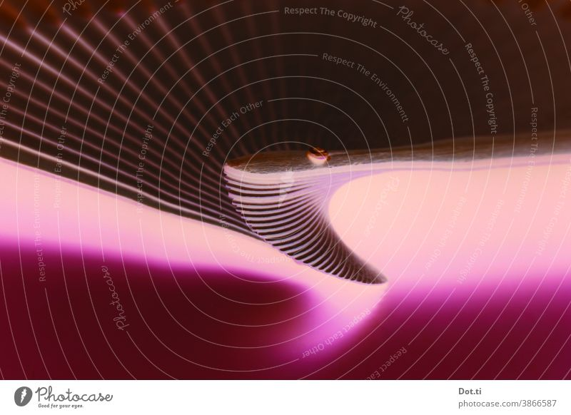 vertebra structure Abstract fanned out pink Light