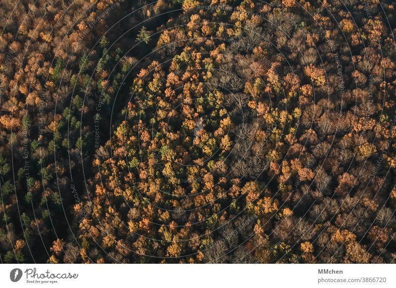Bird's eye view of mixed forest in autumn Deciduous tree Coniferous trees Mixed forest Mixed forest from above clearing Autumn Indian Summer Bleak Green Yellow