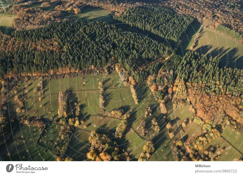 Bird's eye view of meadows and forests from above Forest Meadow Light Shadow Tree Coniferous trees Deciduous tree Bird's-eye view from on high Landscape Autumn