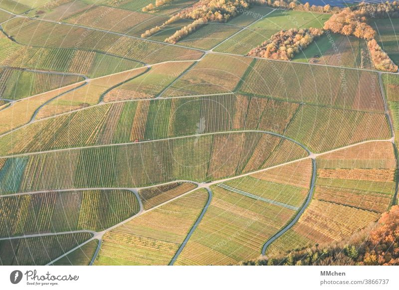 Bird's eye view of the vineyards in autumn Autumn Landscape Field Nature Exterior shot Environment Moselle Mosel (wine-growing area) Vine Winegrower