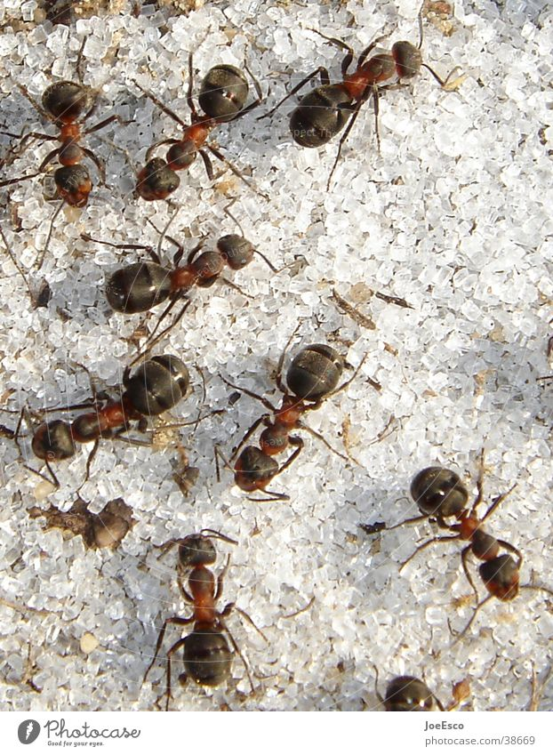 forest ants inferno Environment Wild animal Group of animals Exceptional Ant Insect Sugar Macro (Extreme close-up)