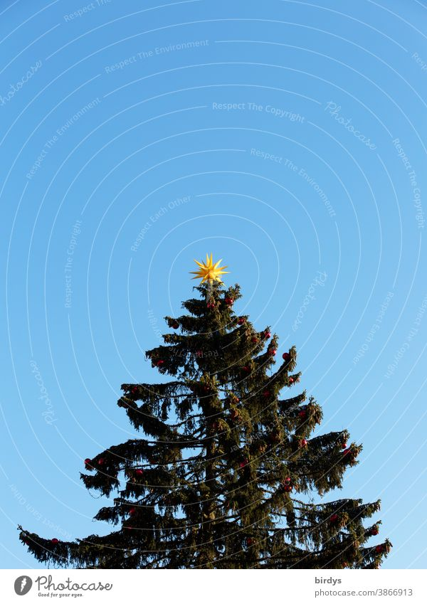 Christmas tree in front of a cloudless sky with a yellow star on top. neutral background Christmas & Advent Christmas star Coniferous trees Sky Blue sky