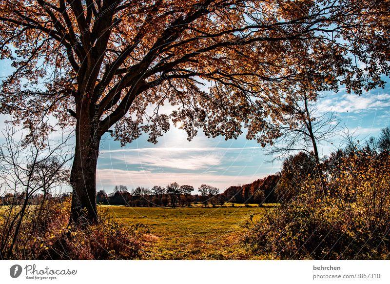 It's coming over. Tree trunk Landscape Autumn leaves Automn wood Sunbeam Idyll Blue sky Sky autumn walk Autumnal colours autumn mood Seasons Calm