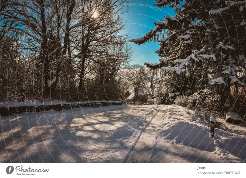Snowy snowy road in a small village on a sunny cold winter day - the sky is blue - the sun is shining - snowy tree tops along the way **100** Winter Street