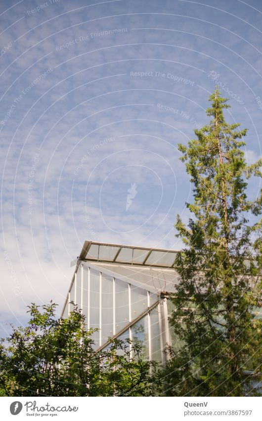 Glass house with trees and blue sky glass house Greenhouse Plant plants Exterior shot Tree Deserted Environment Garden Botanical gardens Exotic Foliage plant