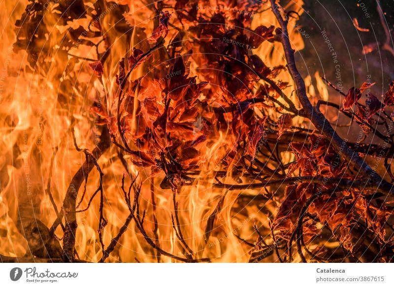 It burns brightly Fireplace Funeral pyre Black Orange Hot Twig leaves ash Primordial element Spark Burn turn up blaze