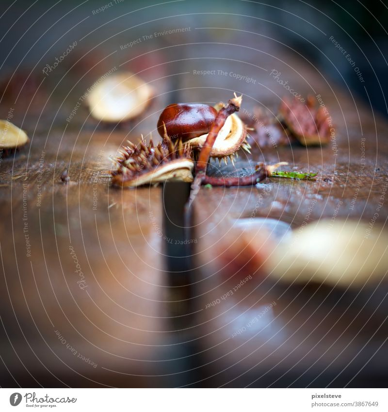 Chestnuts on a bench Autumn Automn wood Autumnal landscape Sense of Autumn Tree Forest Autumnal colours Autumnal weather Nature October Brown Environment Plant