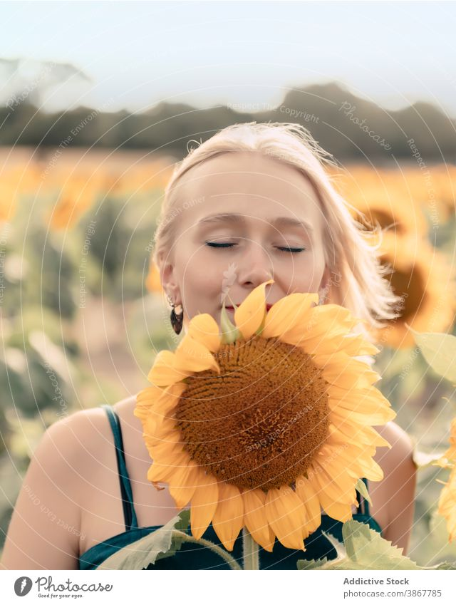 Happy woman smelling sunflower in field enjoy summer happy bloom nature positive young female yellow blond blossom countryside fresh relax lady lifestyle