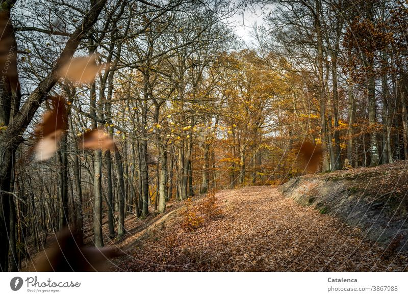 Forest path in November Forest roads forest path Forestry trees foliage deciduous trees Book leaves Winter Foliage Plant flora Nature Sky Gray Brown Environment