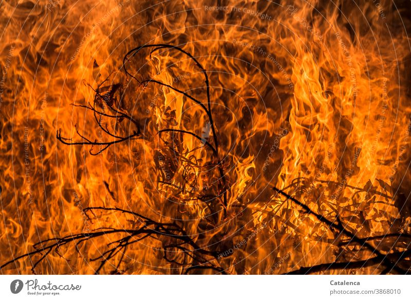 Sea of flames, flames leap up and spread Fire Burn blaze Spark Primordial element Twig Hot Funeral pyre Fireplace Blaze Dangerous ardor peril Orange Yellow
