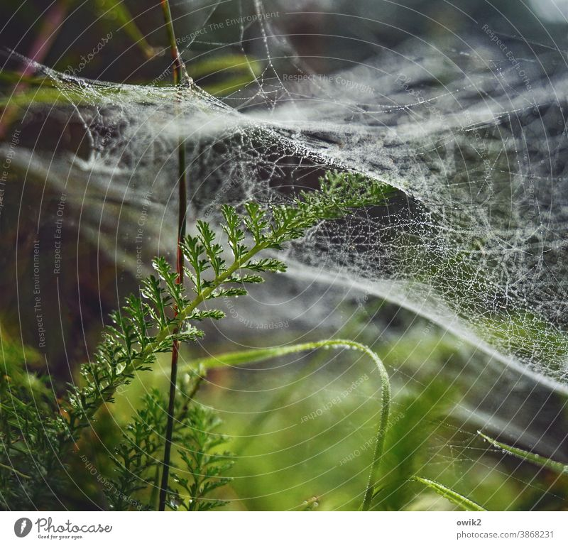 Overdrawn spinning threads Interlaced Foliage plant Colour photo Shallow depth of field Detail Close-up Exterior shot Environment Nature Plant Drops of water