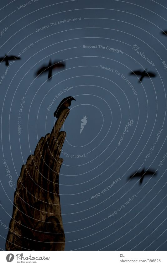 raven Sky Autumn Bad weather Church Dome Animal Wild animal Bird Wing Raven birds Crow 1 Group of animals Flock Flying Threat Dark Creepy Blue Calm Sadness Fear