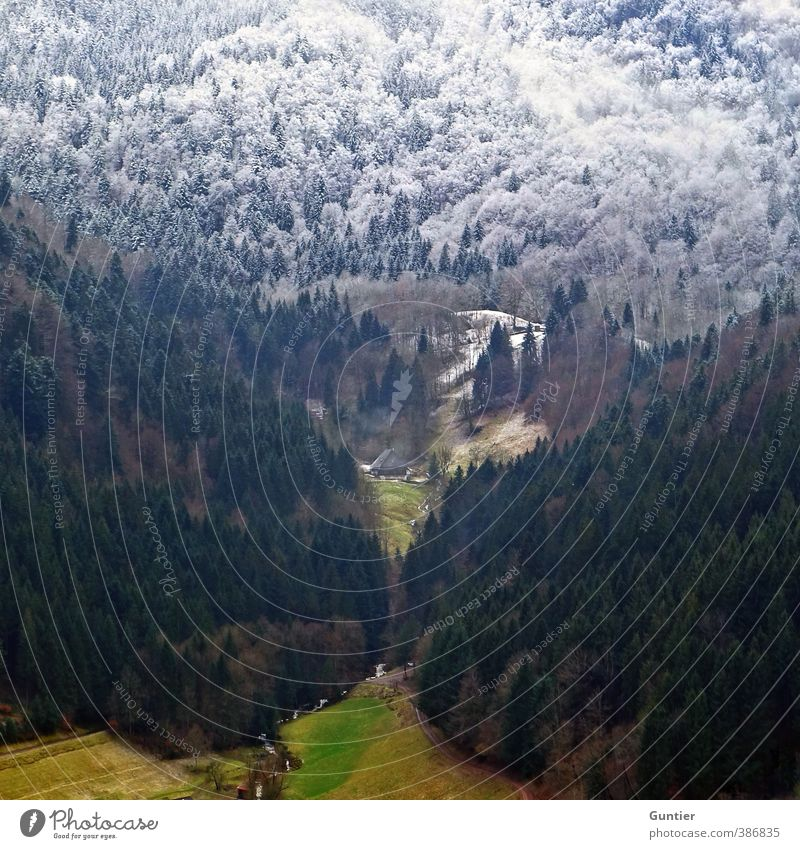 Nature Green Landscape White Tree Forest Winter Mountain Autumn Snow Grass Brown Field Weather Climate Change