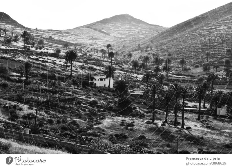 Oasis on Lanzarote palms Desert Landscape Summer Vacation & Travel Deserted Far-off places Canaries Island Black & white photo Smooth Waves Terraced fields